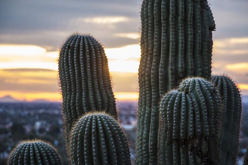 Arizona Dessert cacti, Living in Phoenix AZ