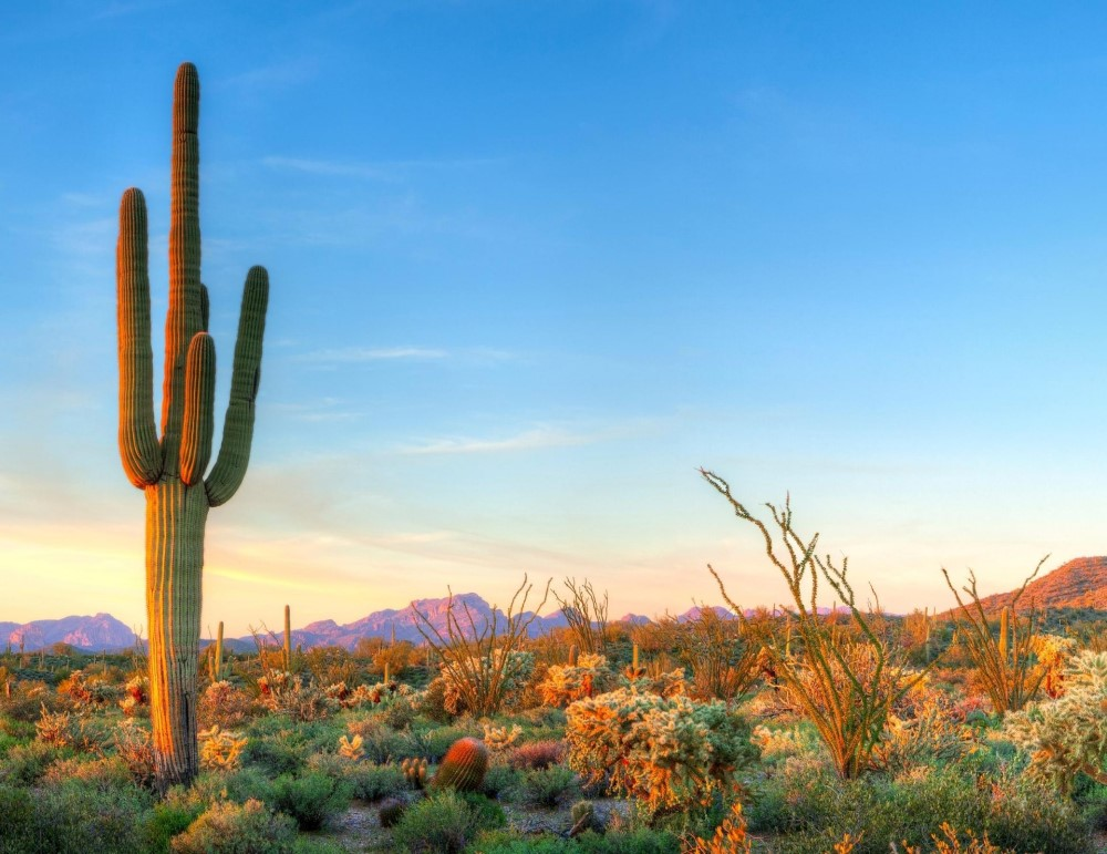 view of downtown Phoenix at sunset, Living in Phoenix Arizona real estate