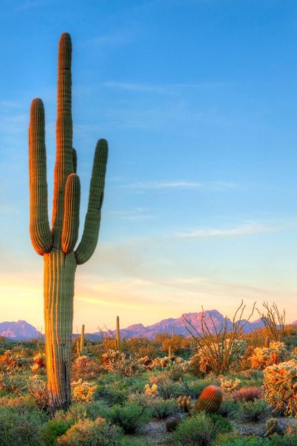 Arizona landscape, Living in Arizona vs California, Living in Phoenix real estate (13)