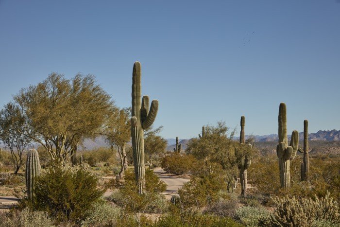 landscape in Phoenix, 10 things to know before moving to Phoenix Arizona