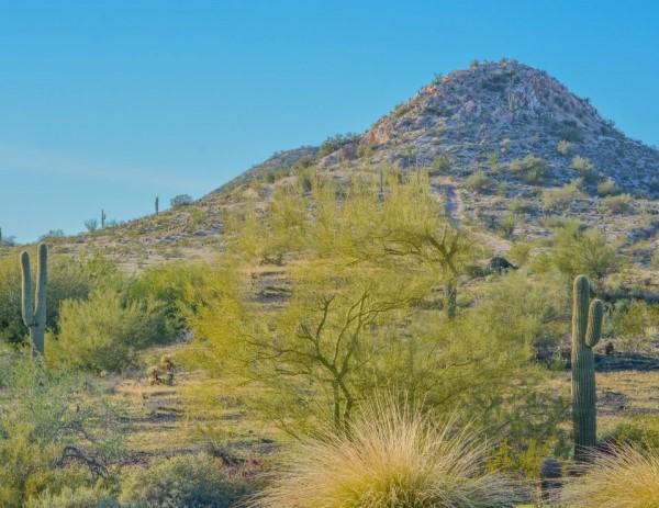 Peoria AZ landscape, Peoria Arizona, Living in Phoenix real estate