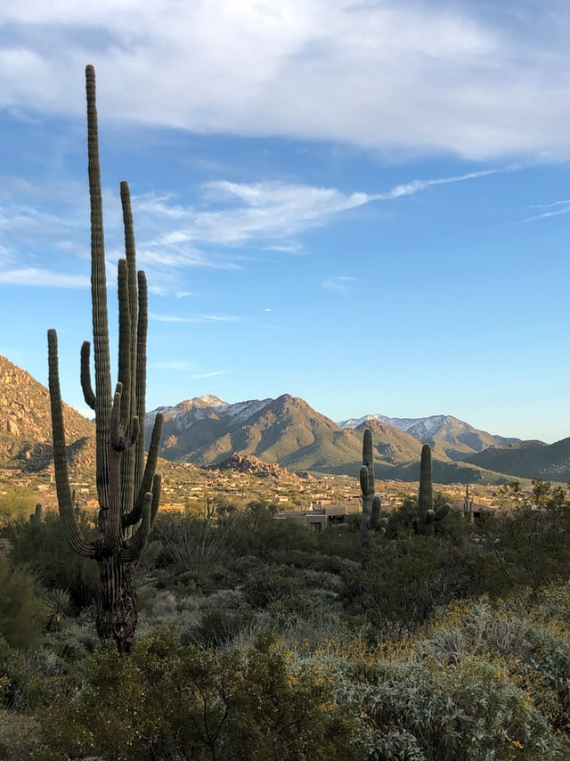 desert landscape in Scottsdale AZ, Pros & Cons of Living in Scottsdale, Living in Phoenix real estate, lisa-campbell-KCBCO0j4QTw-unsplash