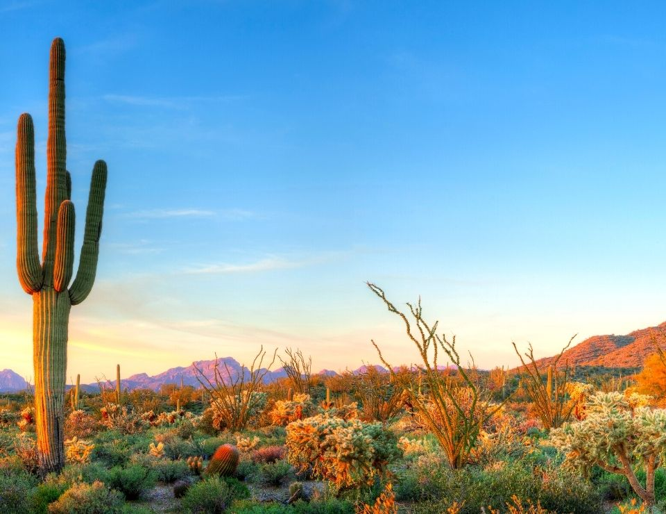 desert landscape in Phoenix, Reasons why everyone is moving from CA to Phoenix