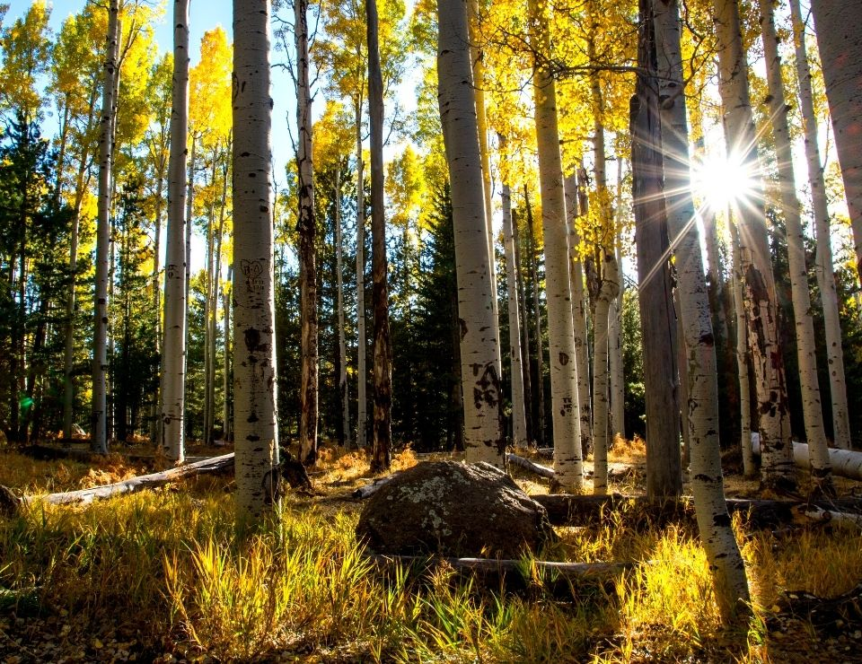 forested area in Flagstaff, Challenges when buying a home in Flagstaff, Az