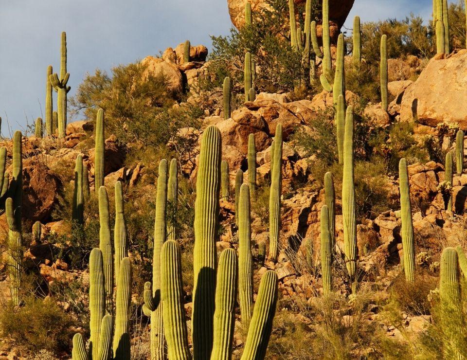 Saquaro cacti in Arizona, Unique Arizona Laws